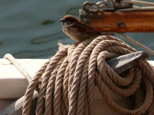 Sparrow on a boom